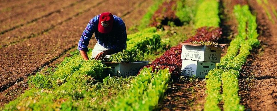 Operai agricoli, contratto rinnovato